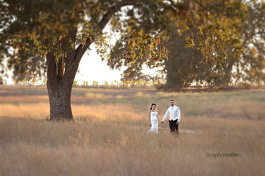 Mission San Luis Obispo Wedding Castoro Cellars Photography